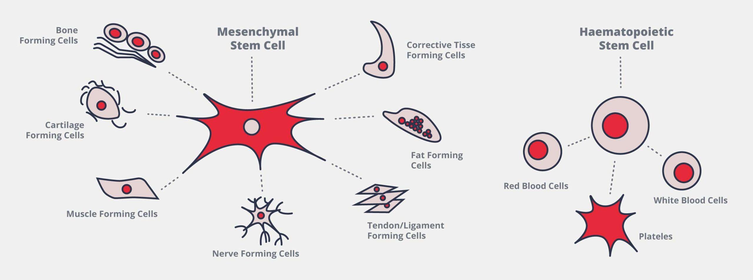 Stem Cells From Umbilical Cord Tissue Cellaviva