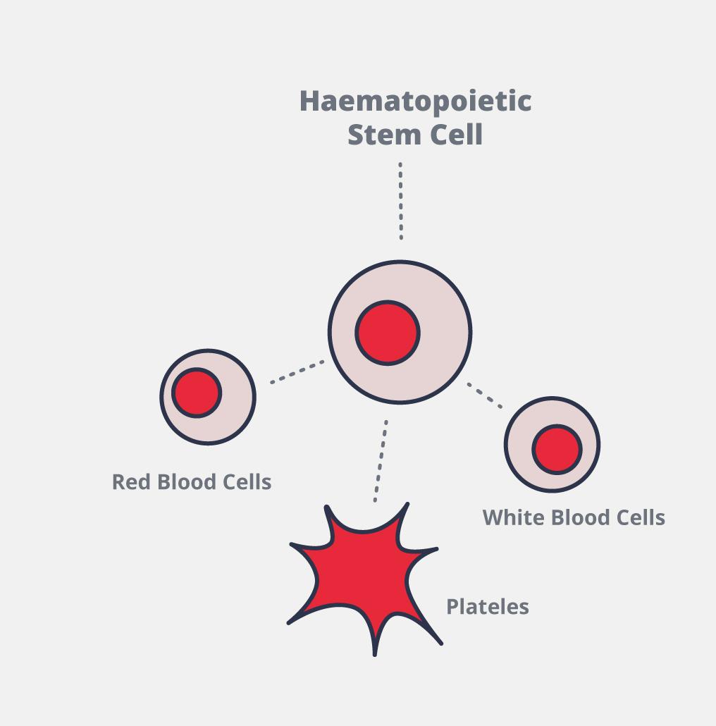 vad är en stamcell
